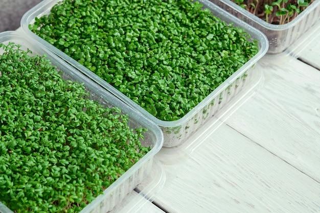 Pudełka z zieleniną rzeżuchy i brokułów na białym stole.