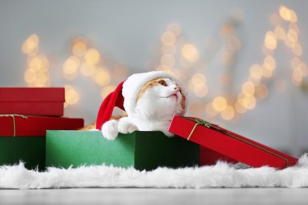 Pudełko prezentowe z uroczym kotem w kapeluszu świętego mikołaja na niewyraźne świąteczne lampki
