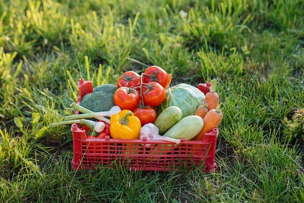 Pudełko z dojrzałymi i pięknymi warzywami zebranymi z ekologicznego ogrodu. zdrowy tryb życia. przyjazna dla środowiska i zdrowa żywność.