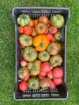 Pudełko z dojrzałymi kolorowymi pomidorami stoi na zielonej trawie