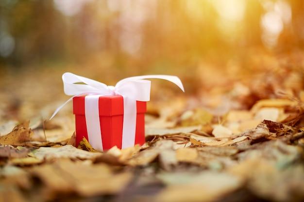Pudełko z jesiennych liści