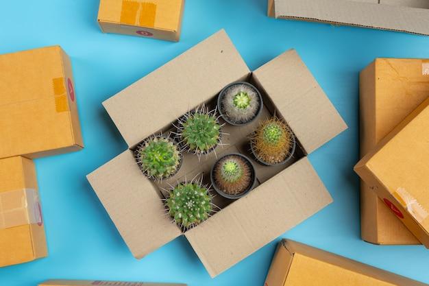 Pudełko z niebieską powierzchnią kaktusa.