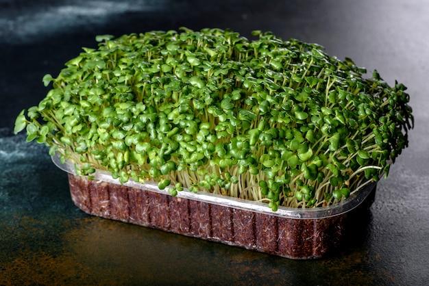 Pudełko ze świeżymi kiełkami mikro rzodkiewki do dodawania zdrowej żywności do potraw. przygotowywanie dań wegetariańskich