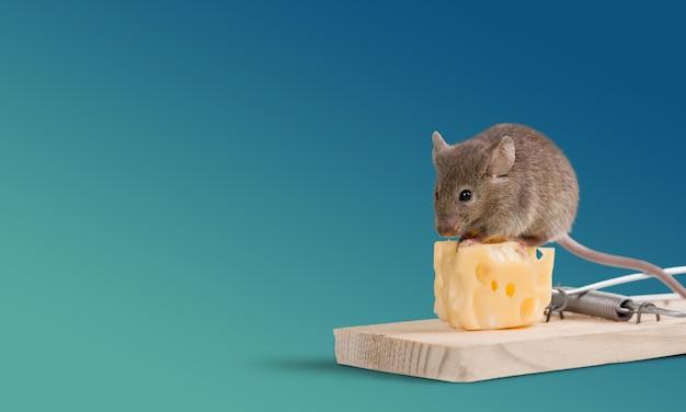 Pułapka na myszy z serem i myszką