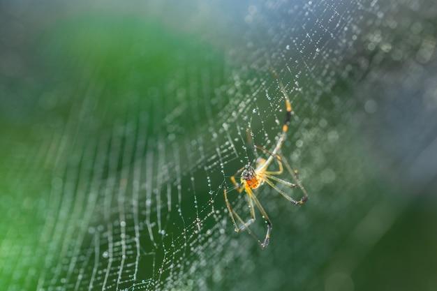 Pułapki ciemny projekt czarne pająki pająki