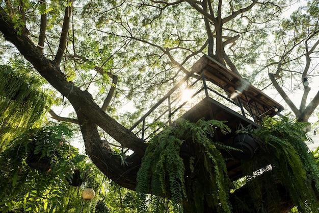 Punkt widzenia kabiny metalowej na wielkim drzewie przed światłem słońca.