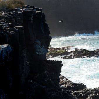 Punta suarez, wyspa espanola, wyspy galapagos, ekwador