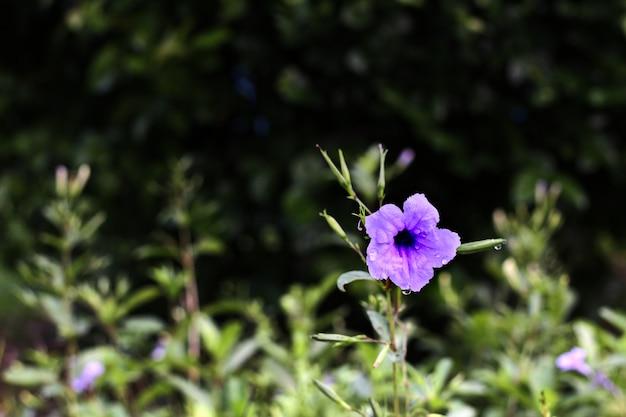 Purpura kwiat na drzewnym backgrond w kolekci purpury
