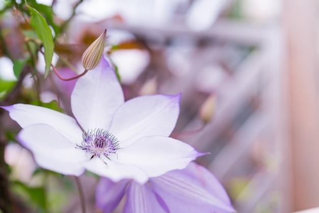 Purpura kwiat na zamazanych tło