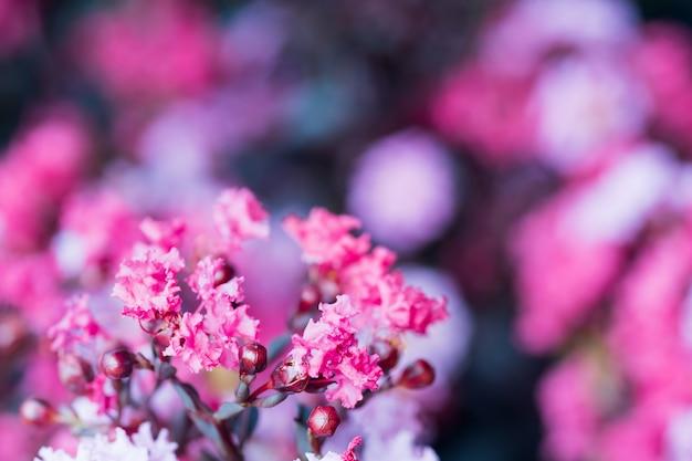 Purpurowe kwiaty i liście lata tło