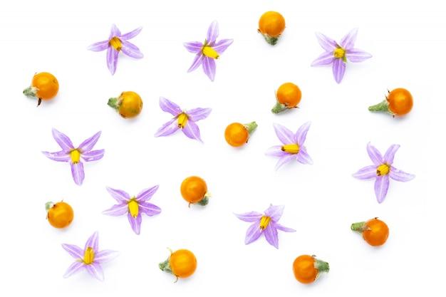 Purpurowe kwiaty pomidorów i żółtych pomidorów