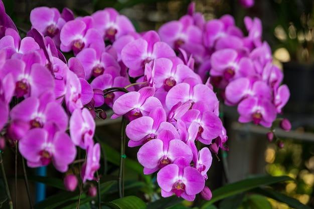 Purpurowe kwiaty w kwiaciarni