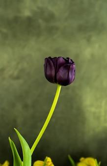 Purpurowe kwiaty w ogrodzie