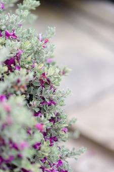 Purpurowe kwiaty z białych liści drzew piękno natury