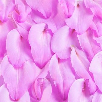Purpurowe lilie płatki skład tle, z bliska