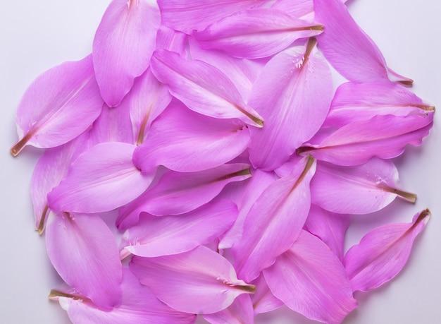 Purpurowe lilie płatki skład tle, z bliska.