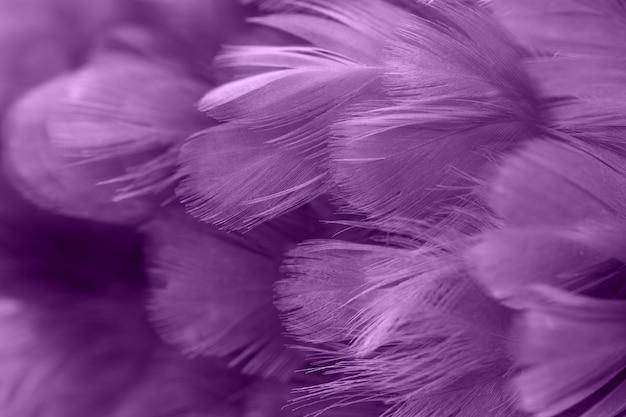 Purpurowe pióra kurczaka w miękkich i rozmycie stylu na tle