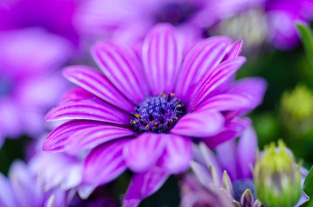 Purpurowe zamazane kwiaty to rozmyte tło wzorzyste.