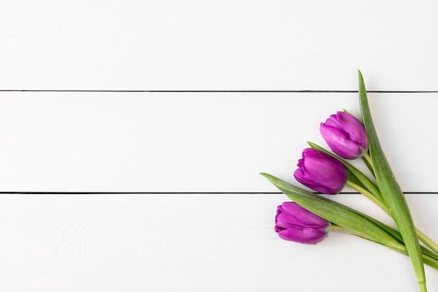 Purpurowi tulipany na białej drewnianej ścianie z miejscem dla teksta