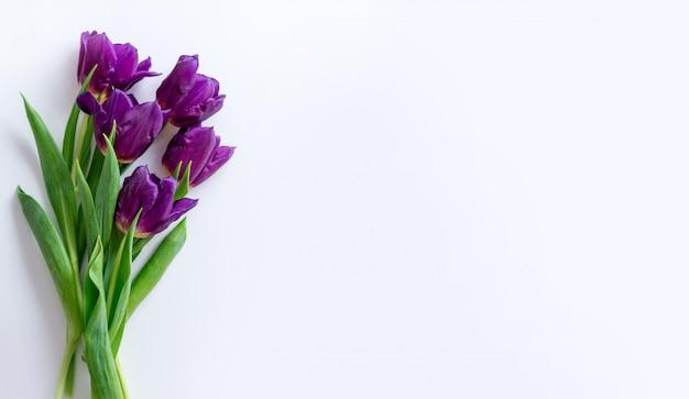 Purpurowi tulipany na białym tle. rama wiosna z miejscem na tekst