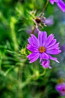 Purpurowy kwiat otoczony zieloną trawą w ciągu dnia