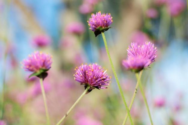 Purpurowy kwiat przy światłem słonecznym.