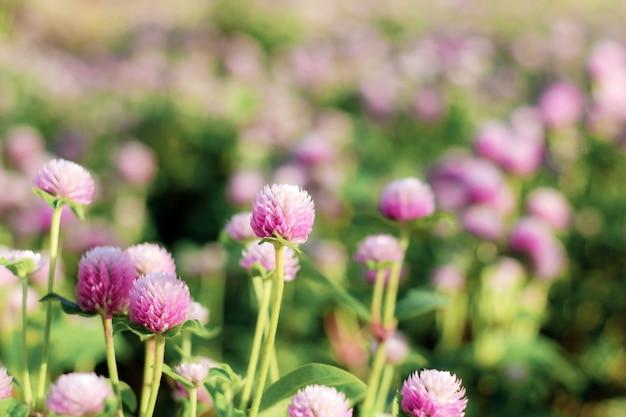 Purpurowy kwiat z wschodem słońca.
