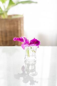 Purpurowy storczykowy kwiat w szkle na stole.
