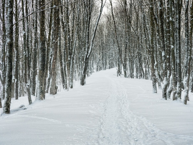 Pusta aleja w zaśnieżonym lesie zimą