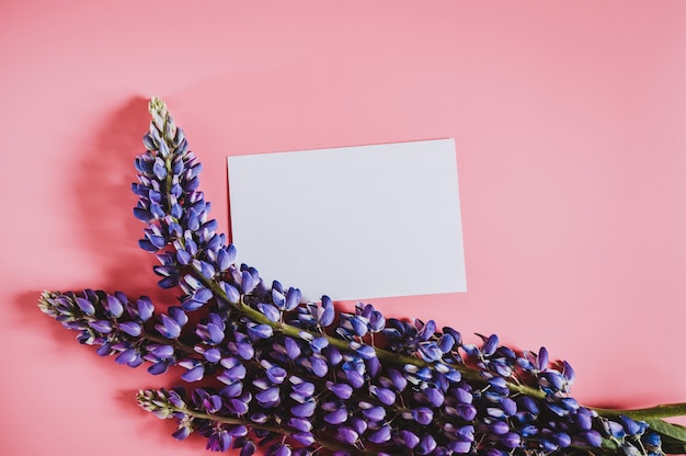 Pusta biała kartka papieru makieta dla tekstu z ramką wykonaną z kwiatów łubinu w kolorze niebieskim liliowym w pełnym rozkwicie na różowym tle leżał płasko. miejsce na tekst
