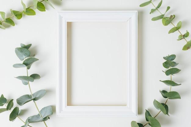 Pusta biała ramka otoczona zielonymi liśćmi gałązka na białym tle