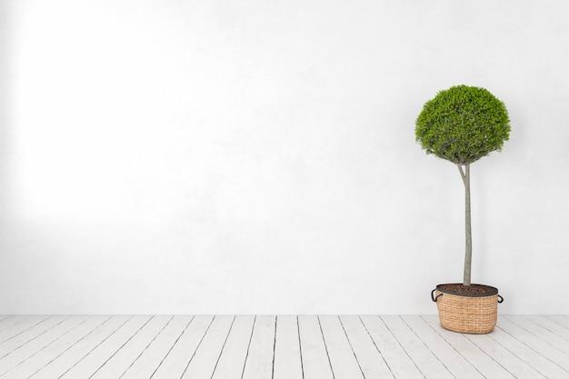 Pusta biała ściana z rośliną, drzewem, drewnianą białą podłogą. ilustracja renderowania 3d