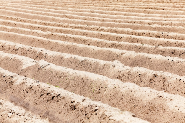 Pusta część pola rolnego część pola uprawnego przygotowana do siewu roślin pusty pług polowy