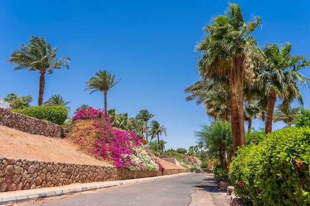 Pusta droga, kolorowe kwiaty i palmy na ulicy egiptu w sharm el sheikh