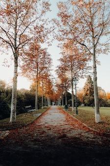 Pusta droga między drzewami o brązowych liściach