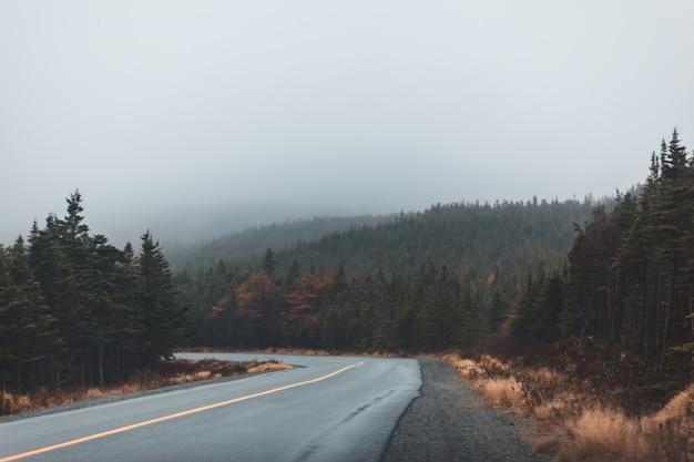Pusta droga między drzewami w ciągu dnia