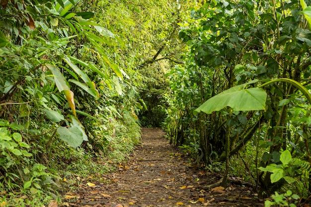 Pusta droga przemian wraz z zielonym drzewem w tropikalnym lesie deszczowym