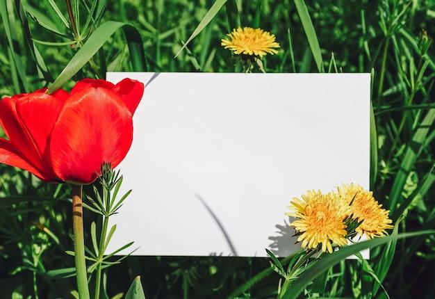 Pusta kartka z życzeniami dla tekstu na łące z zieloną trawą, makami i kwiatami mniszka lekarskiego
