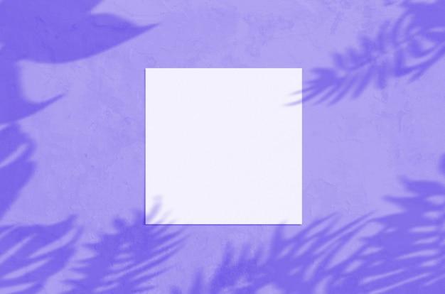 Pustą kartkę z życzeniami z nakładki cień liścia i gałęzi