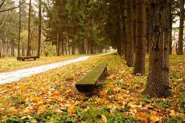 Pusta ławka w parku z wieloma pomarańczowymi jesiennymi liśćmi klonu wokół i na niej.