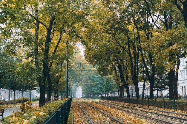 Pusta linia kolejowa otoczona zielonymi drzewami na ulicy