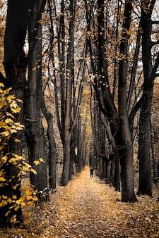 Pusta ścieżka pokryta opadłymi liśćmi w parku jesienią między bezlistnymi drzewami