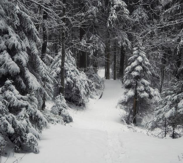Pusta ścieżka w zimowym ciemnym strasznym lesie po opadach śniegu