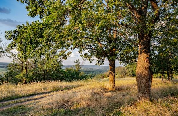Pusta wiejska droga przez las z suchą trawą i zielenią