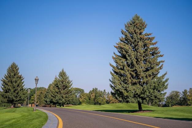 Pusta zakrzywiona droga, błękitne niebo i zielona sosna. kijów, ukraina