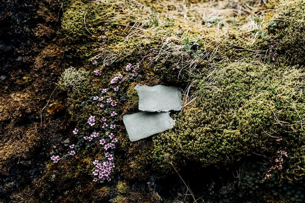 Puste tablice leżą na kamieniach porośniętych mchem i zieloną trawą w otoczeniu pięknych kwiatów