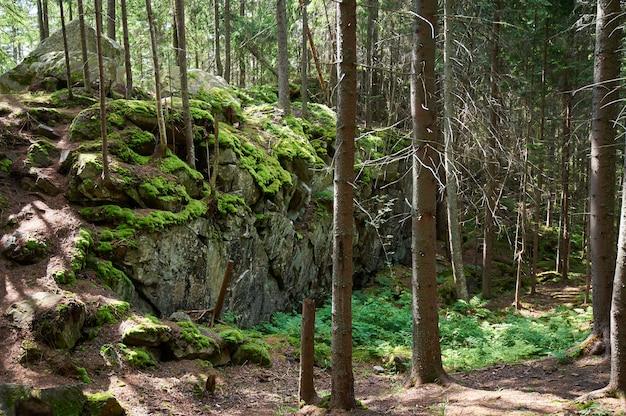 Pustkowie krajobraz las ze skał, jodły i mchu