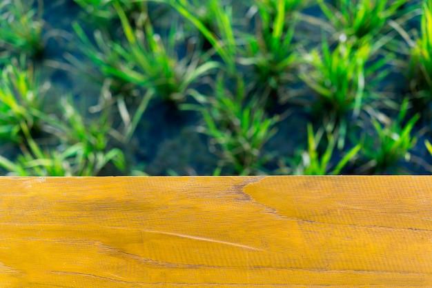 Pusty drewniany stół z ryżu polem jako tło