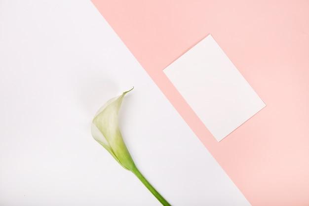 Pusty pocztówkowy kwiat kalla menchii tło