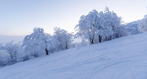 Pusty stok narciarski ze świeżo zrolowanym śniegiem o świcie.